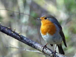 Pájaros en Can Xardó