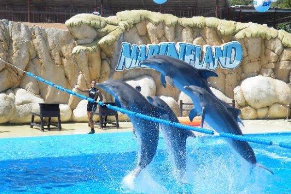 Excursión a Marineland